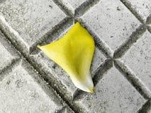 Маленький мягкий лепесток упаденный на пол Стоковые Фото