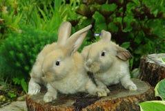 маленький пень кроликов Стоковые Изображения RF