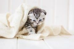 Маленький прелестный котенок идя на белый пол Стоковое Фото