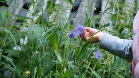 Маленький ребенок касается свежим цветкам в саде, замедленном движении сток-видео