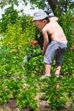 Маленький садовник Стоковые Фото