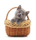 Маленький серый котенок в корзине Стоковое Изображение RF