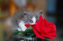 Маленький серый котенок с поднял стоковое изображение rf