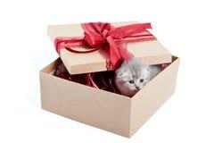 Маленький серый прелестный котенок смотря из украшенной коробки дня рождения присутствуя милый для кто-то Стоковое Изображение RF