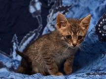 маленький унылый серый striped котенок Стоковое Фото