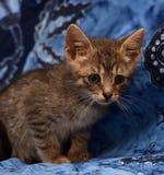 маленький унылый серый striped котенок Стоковые Изображения