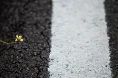 Маленький цветок на поле асфальта Стоковые Изображения RF