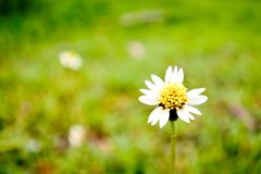 Маленький цветок травы в поле Стоковое Изображение
