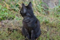 Маленький черный котенок сидя на улице в зеленой траве стоковое фото