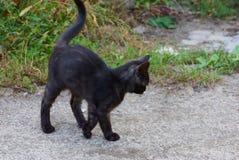 Маленький черный котенок стоит на серой дороге около зеленой травы стоковое фото