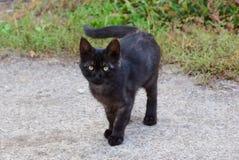 Маленький черный котенок стоит на серой дороге около зеленой травы стоковые фото