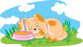 маленький щенок Стоковое Фото