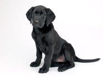 маленький щенок стоковая фотография