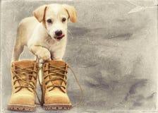 Маленький щенок labrador в старой желтой карточке года сбора винограда ботинок стоковое фото rf