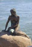 маленький mermaid стоковые фотографии rf