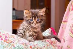 Маленький striped котенок при голубые глазы сидя в спальне дальше Стоковые Изображения RF