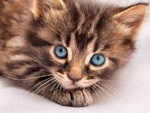 Маленький striped котенок с голубыми глазами кладет и смотрит для того чтобы иметь Стоковое фото RF