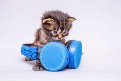 Маленький striped котенок с наушниками Музыка в обычной жизни L Стоковое Изображение