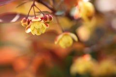 3 маленьких желтых цветка, 2 бутона Стоковые Изображения RF