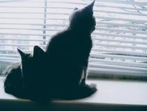 2 маленьких кота Стоковое фото RF