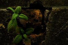 Маленькое деревце на сломленном кирпиче Стоковое Фото