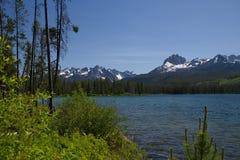 Маленькое озеро 1959 Redfish стоковые изображения