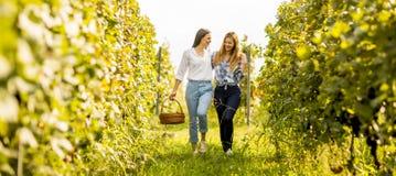 2 маленькой девочки выбирая виноградины в винограднике Стоковые Фотографии RF