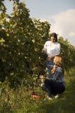 2 маленькой девочки выбирая виноградины в винограднике Стоковые Изображения RF