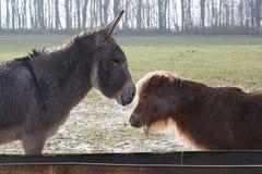 Маловероятное приятельство между 2 животноводческими фермами стоковая фотография