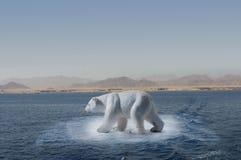 малое айсберга медведя приполюсное Стоковые Изображения