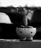МАЛОЕ ДЕРЕВО, КОТОР ВЫРОСЛИ В SMILEY-POT Стоковые Фото