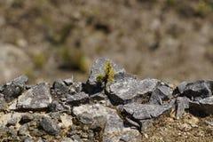 Малое дерево растя на утесах Стоковое фото RF