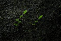 Малое дерево то вставляет к стене утеса в природе стоковые изображения