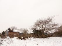 Малое деревянное поле снега зимы дерева сарая вне белого natur неба Стоковое Изображение RF