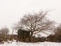 Малое деревянное поле снега зимы дерева сарая вне белого natur неба Стоковое фото RF