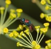 Малое насекомое в природе Макрос Стоковое фото RF