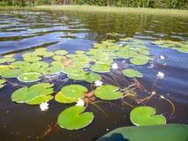 Малое озеро леса Стоковые Фото