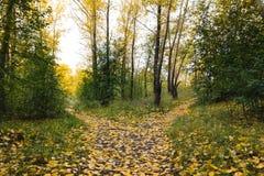 Малое, покрытый с упаденными листьями, путь разделено в tw стоковое фото