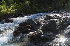 Малое река в горах Altai стоковые изображения