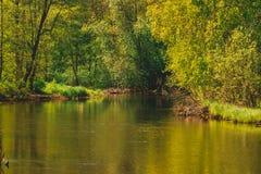 Малое река в летнем времени узкое река и трава растя на береге, конец-вверх в лете в солнечной погоде Река Стоковые Изображения RF