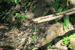Малое река пропуская через лес, воду и древесину Стоковая Фотография RF