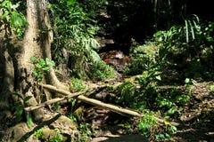 Малое река пропуская через утесы Стоковые Изображения RF