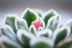 Малое розовое сердце конфеты лежа на shaggy зеленых листьях Стоковое фото RF