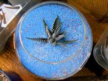 Малое украшение /succulent бака завода Стоковое Фото