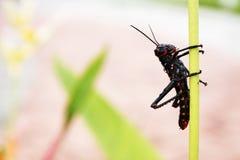 Малое экзотическое насекомое садилось на насест тихо на стержне Стоковое фото RF