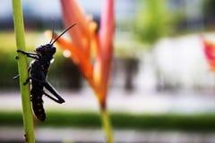 Малое экзотическое насекомое садилось на насест тихо на стержне Стоковая Фотография