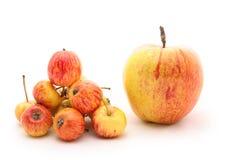 малое яблока большое стоковое фото