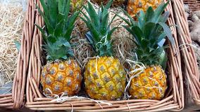 Малые ананасы Стоковое Изображение RF