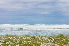 Малые белые прибрежные цветки на атлантическом береге моря стоковое изображение