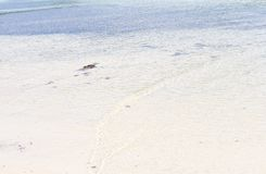 Малые волны на пляже Стоковое Фото